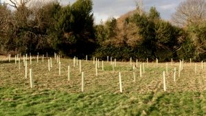100 mixed trees planted in November to create a copse in the corner of our field