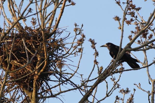Why Bewl Rookery
