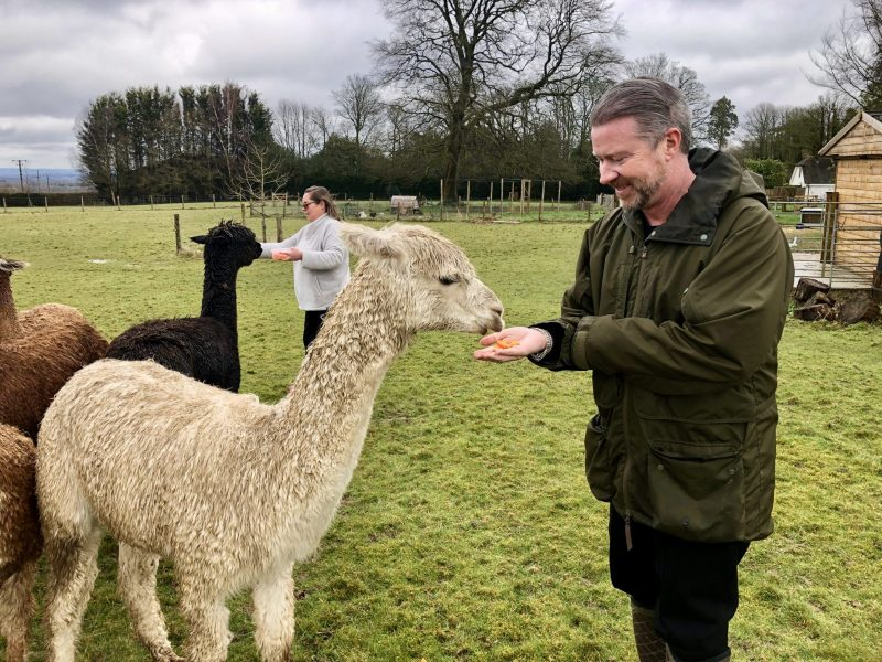 Feeding Bewl Rookery Alpacas