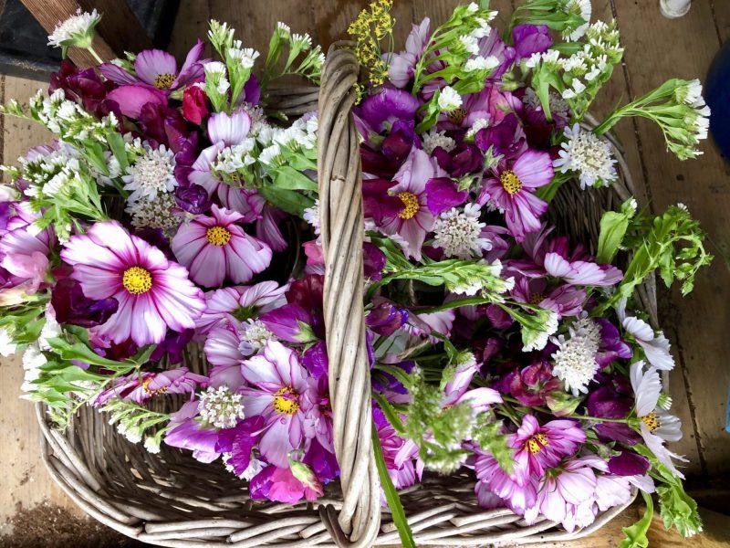 Bewl Rookery Flowers