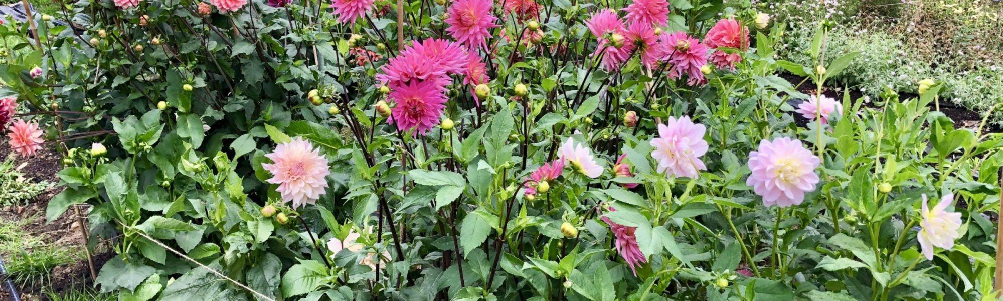 Bewl Rookery Flower Field